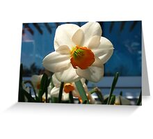 Narcissus in the shade Greeting Card