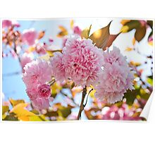 Pink Flower Tree Poster