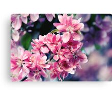 Crabapple Blooms Canvas Print