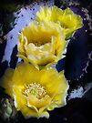 Yellow Glory by Lucinda Walter