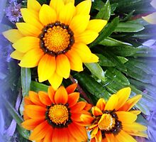 Three of a Kind in Orange Gazania by EdsMum