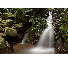Of Green and Water Photographic Print