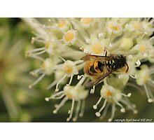 macro wasp 005 Photographic Print