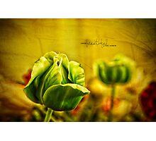 Beautiful Photographic Print