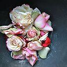 Rose Petals  by Eyoälha Baker