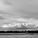 the Marshes - River Test - Southampton by DARREL NEAVES