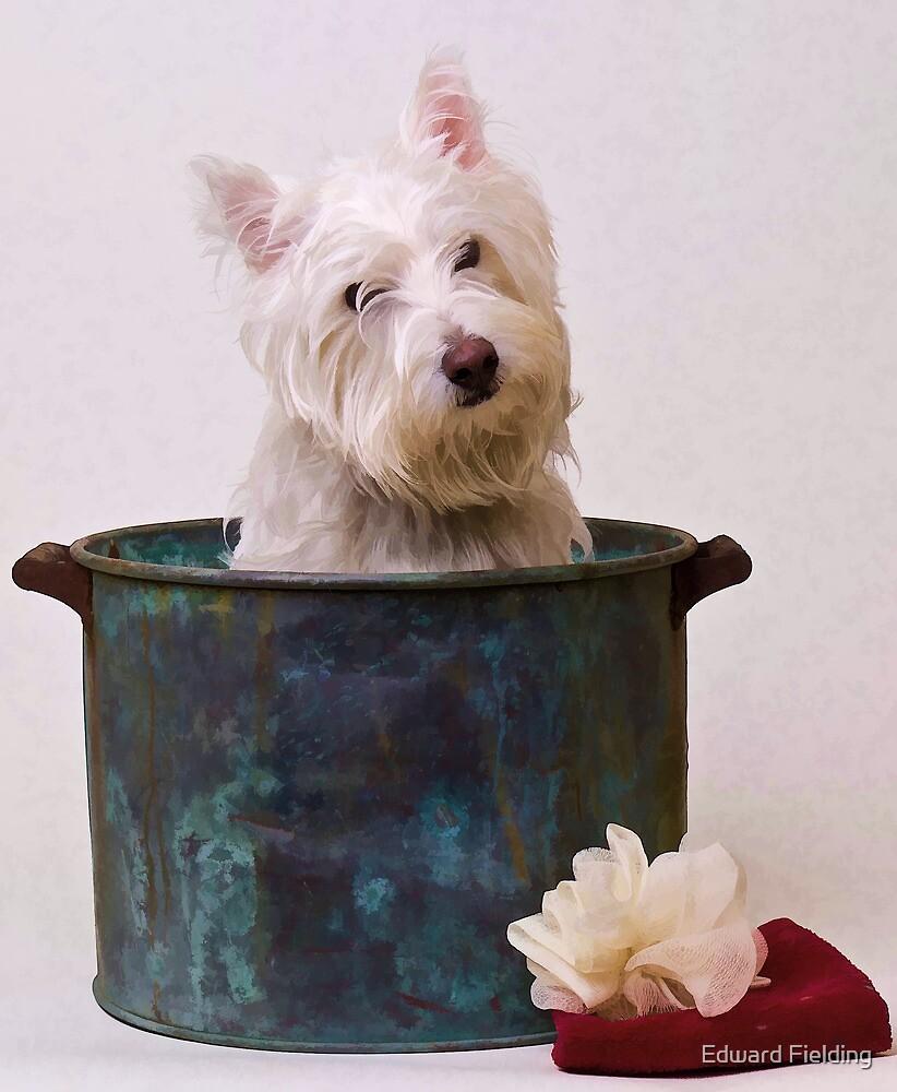 West Highlands White Terrier Puppy Bathtime by Edward Fielding