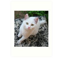 Albie our cat No9 (ex stray) member of the family Art Print