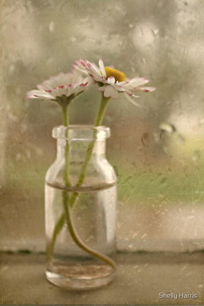 Rainy Day Daisys by Shelly Harris