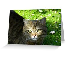 As gorgeous as ever! Greeting Card