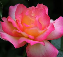 Pat Austin singular bloom by teresalynwillis