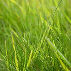 Grass by AmandaJanePhoto