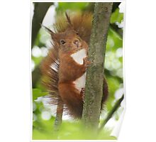 SQUIRREL DIARIES -V- Poster
