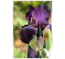 Tarheel Elf Iris Poster