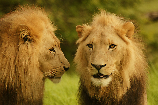 Royal Brothers by AntonAlberts