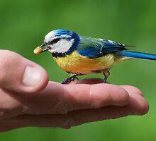 HAND FEEDING -II- by mc27