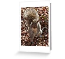 My tail is the prettiest !  Greeting Card
