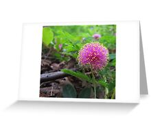 Texas Wildflower - Sensitive Briar Greeting Card