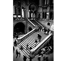 Motion - Natural History Museum Photographic Print