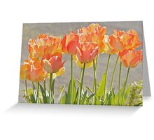 Sunshine through the Tulips Greeting Card