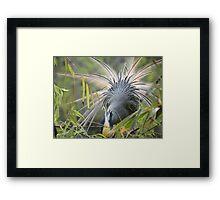 Feathers In Back Light - Plumas En Contraluz Framed Print