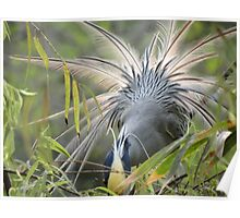 Feathers In Back Light - Plumas En Contraluz Poster