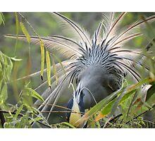 Feathers In Back Light - Plumas En Contraluz Photographic Print