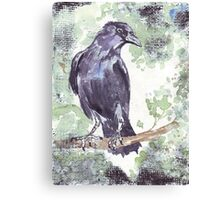 Crow wears a band of Silver Canvas Print