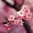 Lovely spring by pawelmatys