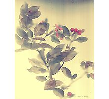 Crab apple blossoms... Photographic Print