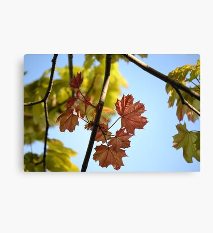The Design of Spring Canvas Print