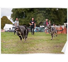 Racing Lurchers Poster