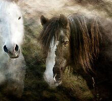 Old Friends by hampshirelady