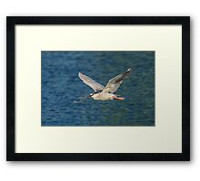 Nest building 101 Framed Print