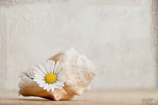 conch shell with daisies by Iris Lehnhardt
