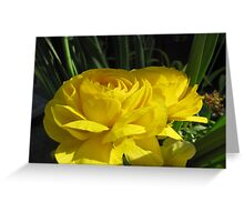 Light and Shadow Greeting Card