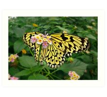 Giant Yellow Butterfly Art Print
