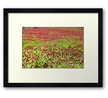 A field of common sainfoin (Onobrychis viciifolia) Photographed in Tuscany, Italy  Framed Print