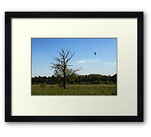 Lonely oak in spring time Framed Print
