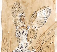 Barn Owl hunting 2 by Maree Clarkson