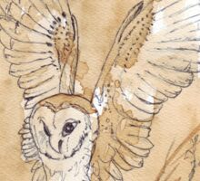 Barn Owl hunting 2 Sticker