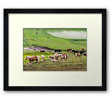 horses graze in the rolling green hills with trees Photographed in Umbria, Italy Framed Print