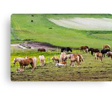horses graze in the rolling green hills with trees Photographed in Umbria, Italy Canvas Print