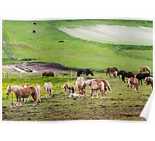 horses graze in the rolling green hills with trees Photographed in Umbria, Italy Poster