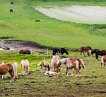 horses graze in the rolling green hills with trees Photographed in Umbria, Italy by PhotoStock-Isra