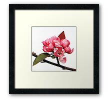 Crab-apple Beauty Framed Print