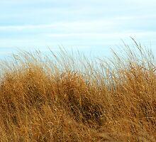 Jersey Beach Grass by Chinita128