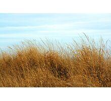 Jersey Beach Grass Photographic Print