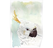 Danny, the Cockatoo 2 Poster