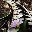 Life/Death- the natural balance by kailani carlson